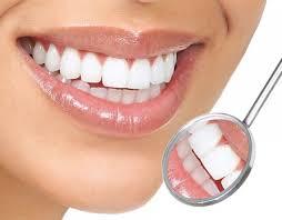 Teeth-roots.jpg